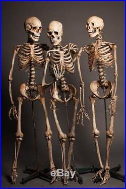 3 CRIME SCENE SKELETONS The Walking Dead Halloween Prop & Decoration Haunted