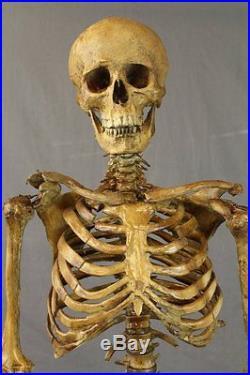 CHOGAN SKELETON The Walking Dead Halloween Prop & Decoration Haunted House